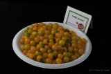 Yellow Currant_hf.jpg