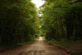 Backus Woods