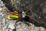 More Insects from Ecuador III
