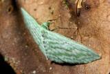Lepidoptera of Ecuador IV