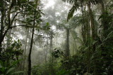 Bellavista Cloud Forest Reserve (2011)