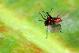 Coleoptera of Ecuador IV