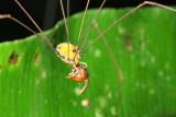 Arachnids of Ecuador II