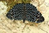 Lepidoptera of Ecuador III