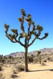 Flora of California