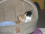 alfie and pixie