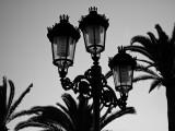 lighting the palm trees