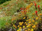 Flowers in McGee Creek Canyon.jpg