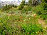 San Joaquin Ridge 2.jpg