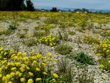 San Joaquin Ridge 3.jpg