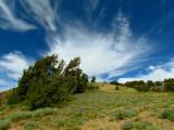 San Joaquin Ridge 6.jpg