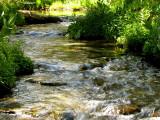 Coldwater Creek 4.jpg