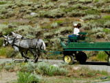 Mules at Work.jpg