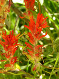 Red Paintbrush.jpg