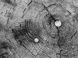 Stump and Nails.jpg
