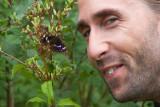 Aspskimmerfjäril (Apatura ilia)