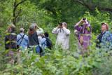 Wood Warblers