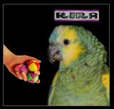 KIRA my parrot