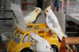 i already told you Dammm its my car !