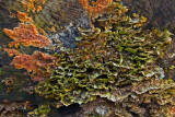 Lichen covered Stump