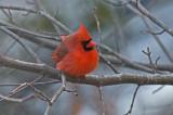 Cardinal--Relaxing
