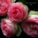 Pierre de Ronsard - Dew - soft
