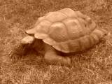 Akron Zoo 2012