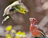 Lake Barcroft Backyard Birds 2012