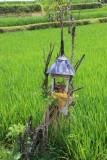BALI - Ubud walks.  Rice paddies, ridges and ravines.