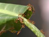Ants  440.jpg