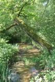 De boom houdt moedig stand.