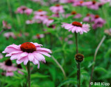Flowers Centenial Garden,  Napier /  Hawkes Bay   1