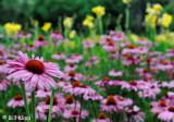 Flowers Centenial Garden,  Napier /  Hawkes Bay  3