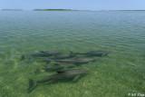 Bottlenose Dolphins, Channel Key  1