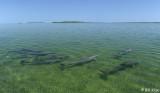 Bottlenose Dolphins  Channel Key   4