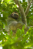 Three Toed Sloth,   Manuel Antonio   1