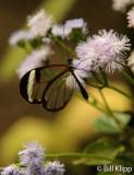 Butterfly, El Castillo  7