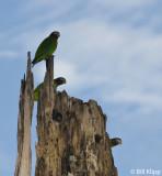 Parrots,  El Castiilo 1