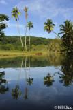 Palm Reflections,  Rio  Esquinas  1
