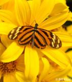 Butterfly, El Castillo 2