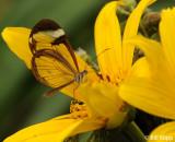 Butterfly, El Castillo 3