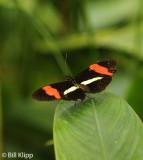 Butterfly, El Castillo 4