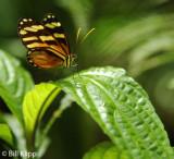 Butterfly, El Castillo 5