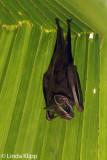 Tent Bat, Casa Orquideas  1