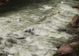 Lava Rapids  1