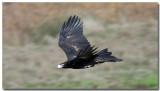 Australian Inland Birds