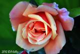 Bulgaria, Land of Roses