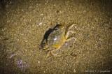 La pêche aux crabes fut fructueuse