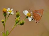 spring_2011