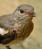 kingfisher_2012
